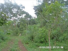 Land for Sale in Mityana Uganda