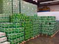 Holanda cerveza