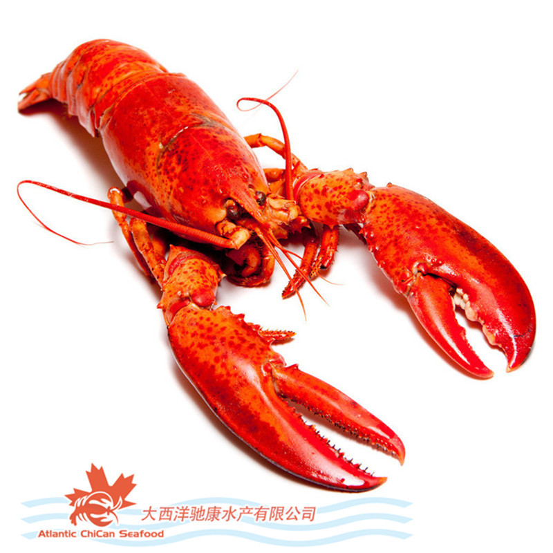 how to cook frozen whole lobster
