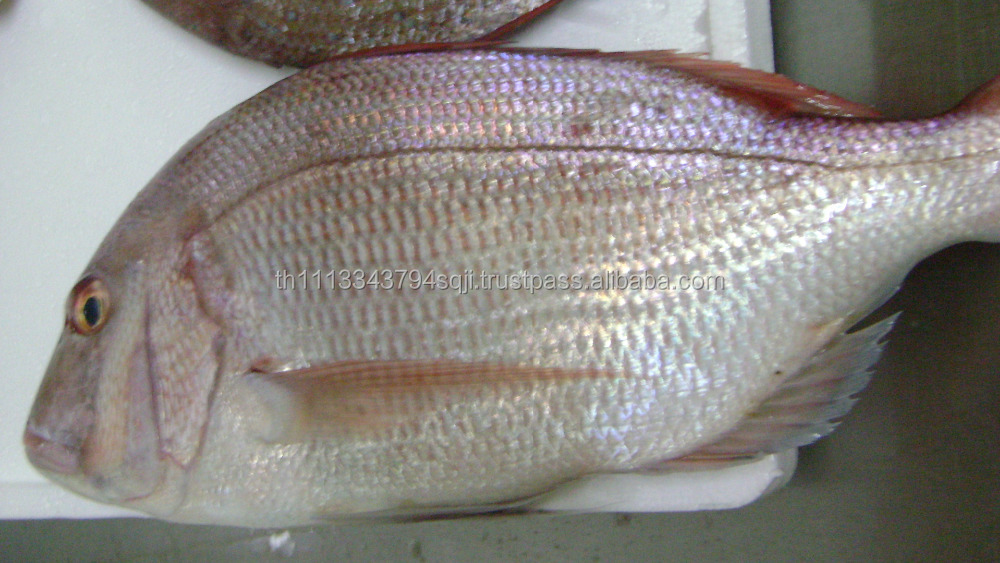 Croaker fish fillet - photo#8