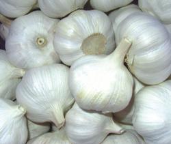 Pure white fresh garlics