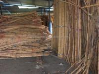 Malaysia rattan raw material stock
