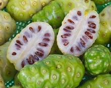 Superior Quality Organic Noni Powder Sale