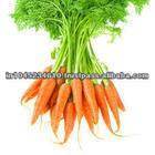 100% Natural & Fresh óleo de semente de cenoura