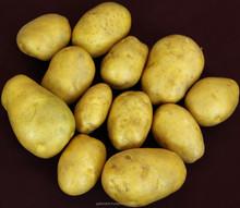 Fresh Diamond Potato