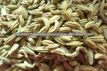 de asia de alta calidad de semillas de hinojo
