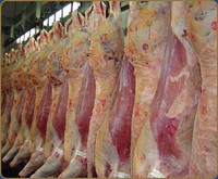 HALAL FROZEN BEEF MEAT/ PORK MEATS, LAMB MEATS AND OFFALS