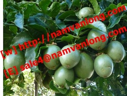 SUPPLY PASSION FRUIT WITH BEST QUALITY