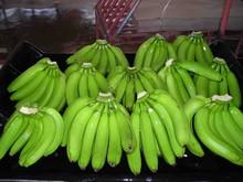 Quality Fresh Green Cavendish Bananas