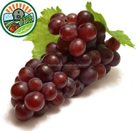 Hot Selling Frozen Grape For Top Quality Frozen Grape With Low Price Individual Quick Frozen Grape Type 1