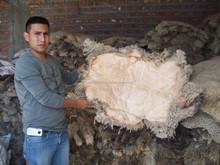 100% Sheep Skins Natural Tip Dry Salted