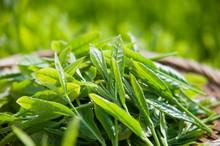 Vietnam Green Tea Broken new season