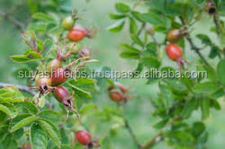 rosehip oil extraction