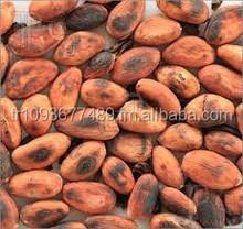 Fresh Cocoa Bean