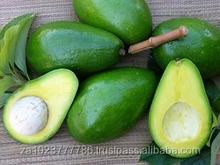Avocados (avocados), fresh Avocados Fruits South African Crop for sale