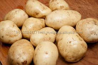New crop farm fresh yellow potatoes/fresh russet potato