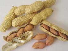 Sudan Raw Peanut Kernel (Groundnut Kernel)