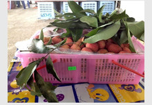 THAI SEASONAL LYCHEE FRUITS, AEC NISA FOOD,