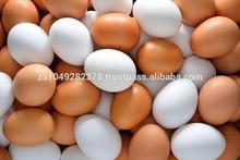 Fresco los huevos de mesa blanco y marrón