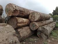 Round Keruing Logs