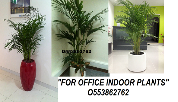 dubai o553862762 buy landscape dubai product on