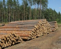 ROUND LOGS FROM SOUTHERN YELLOW PINE