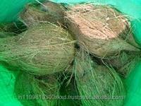 canada imported semi husked coconuts