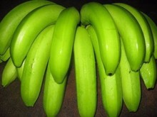Cavendish plátano