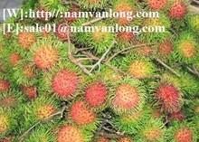 VIETNAM JAVA AND THAI RAMBUTAN NATURAL SWEET