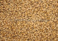 AIBABA.COM Wheat, Barley, Canary Seeds, Clove Grass, Timothy Hay Best Price for Sale From Ukraine