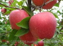 New Crop South African Fresh Fuji Apple Fresh Red Juicy Fuji Apple HOT SALES