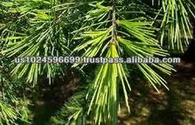 Wholesale supplier Of Pure Cedarwood Oil In USA