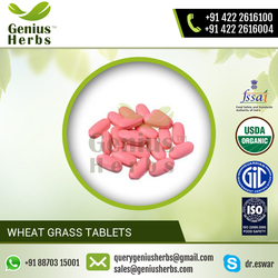 High Quality 100% Natural Wheat Grass Tablets for Sale