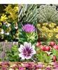 Natural medical herbs form Standard Sepehr Brand of Iran