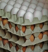 Fresh Chicken eggs on Promotion