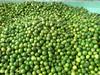 Fresh Seedless Green Lemon good quality from Vietnam