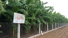 contratto di locazione di terreni agricoli