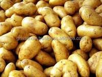 potato 3797