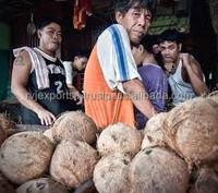 coconut suppliers in kerala