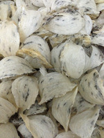 100% natural bird nest from Viet Nam