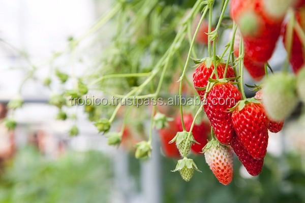 Fruit Picking 700 (19 of 86)_resize(2).jpg