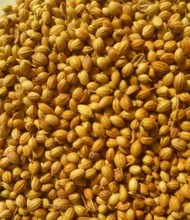 Hybrid New Crop Black / Brown Coriander Seeds Available
