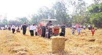 z755 Straw balling Machine High quality For sale Rice Straw/ Hay/ Wheat Straw/ Corn Stalk