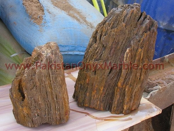 petrified-wood-rough-06.jpg