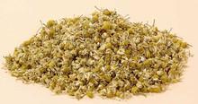 Dry chamomile flower flower, tea taste