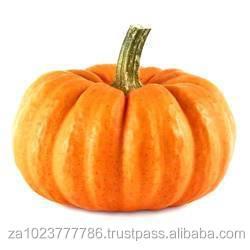 FRESH PUMPKIN High quality Fresh Pumpkin From South Africa