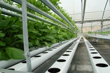 Riego por goteo y sistemas de Hidroponia para Invernaderos y Galpones Hidroponicos