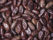 Cocoa Beans - All Varieties - Ships from West Africa - Bulk Cocoa Beans for Sale