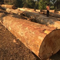 Big size round log timber high quality from Laos
