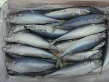 Frozen Whole Yellowfin Tuna Fresh Fish For Export